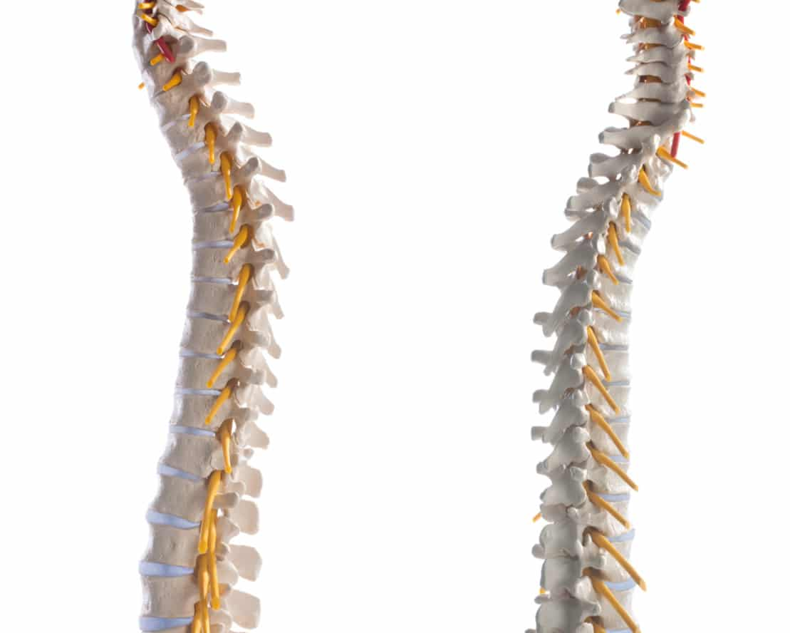spine with nerves